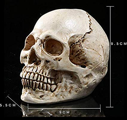 Amazon: Halloween props, fast sale, all over the skull, home ...