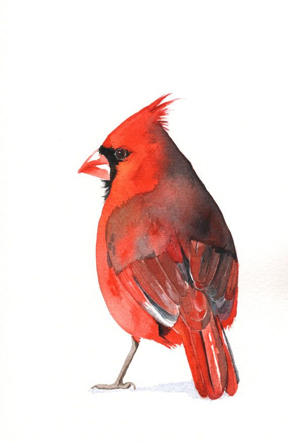 Cardinal Watercolor Painting - Print of watercolor ...